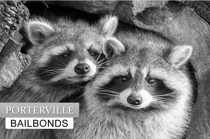 porterville-bail-bonds01