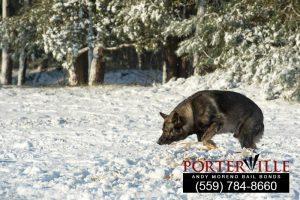 porterville-bailbonds3-108